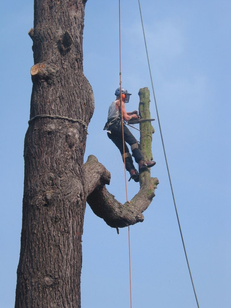 Fully Qualified Tree Surgeon Required