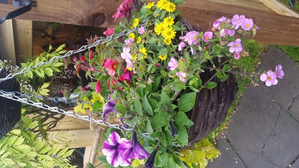 Urban Alfresco Garden Centre - Supplier of quality shrubs, hanging baskets and bedding plants.