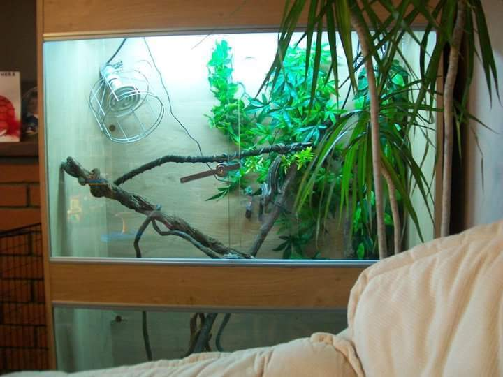 Chameleon Vivarium and set up extras - REDUCED TO CLEAR