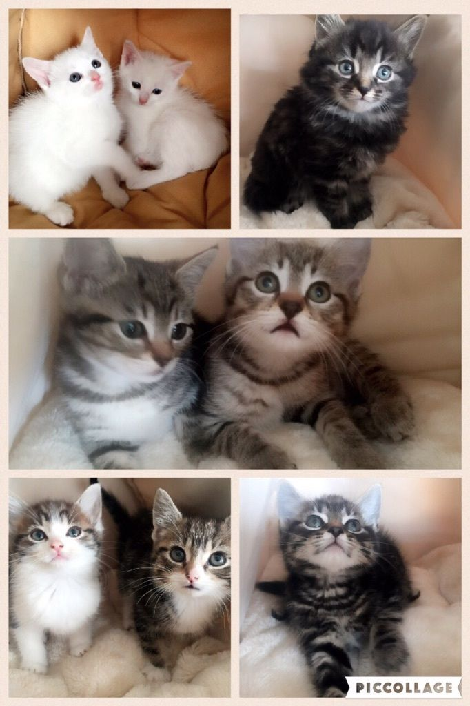 kittens ready to go home