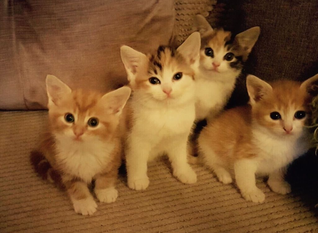 Gorgeous fluffy kittens for sale