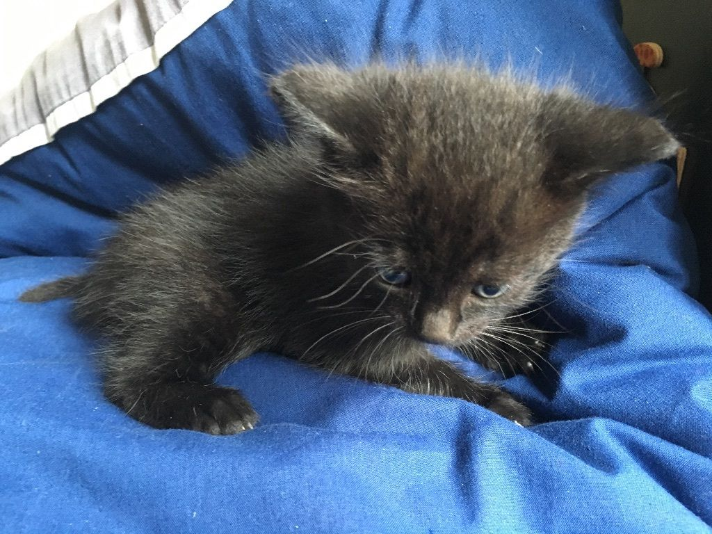 Night fury kitten looking for new caring and kind hands