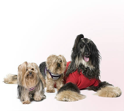 EXPERIENCED DOG GROOMER/PET STYLIST REQUIRED