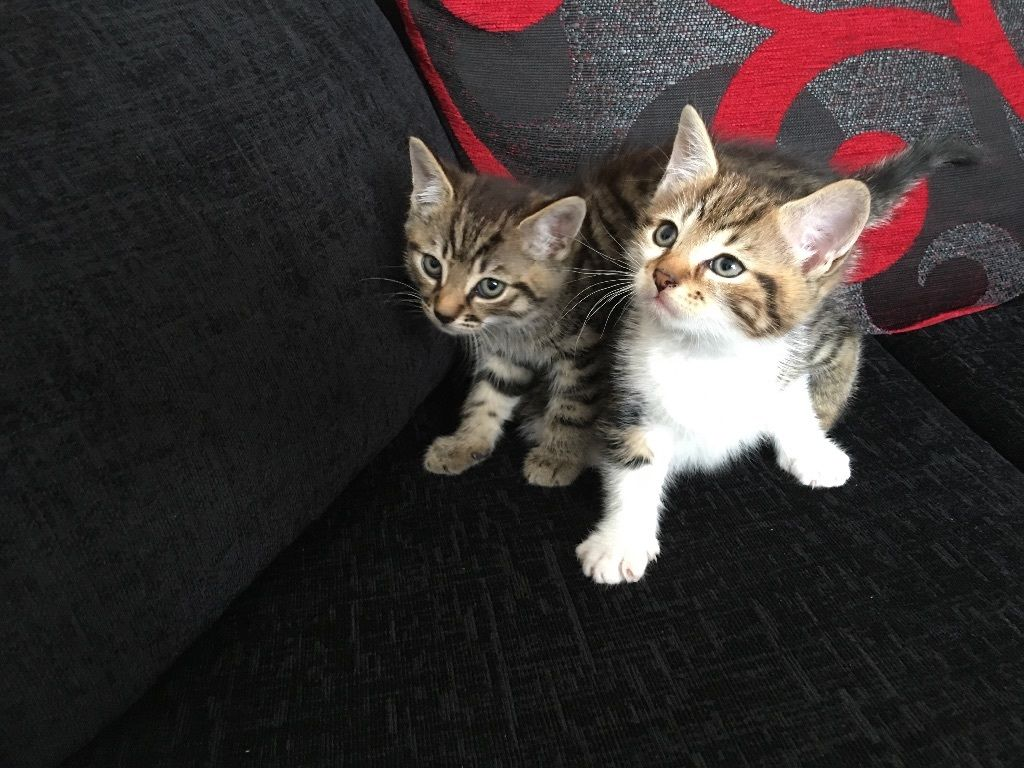 2 male kittens left
