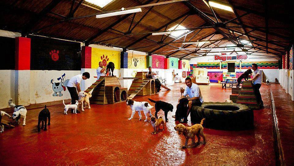 Halo Dogs are looking for a passionate dog lover to join their doggy day care team!