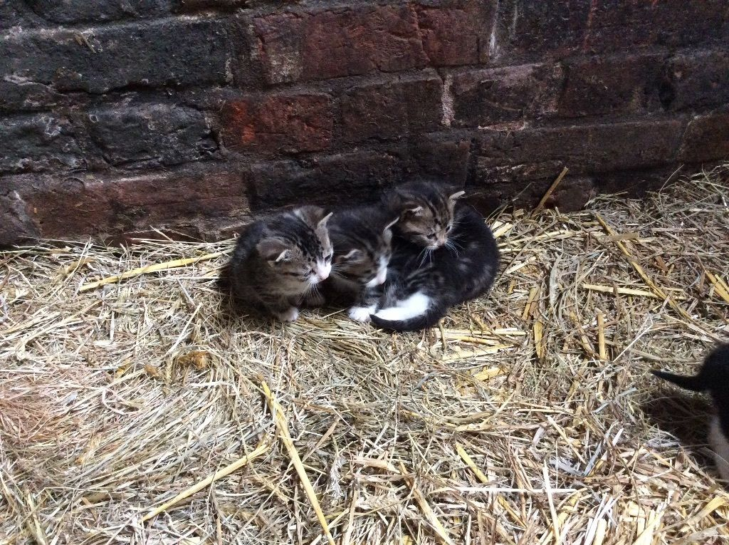 3 Beautiful kittens for sale boy and girl available