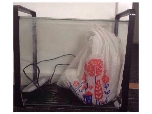 Mint Condition Fish Tank