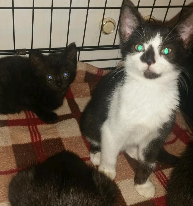 Rescue kittens looking for forever homes
