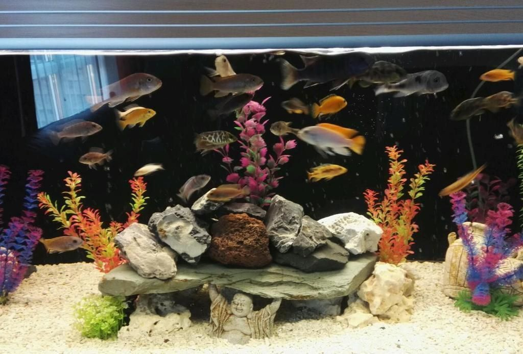 5 foot fish tank, complete malawi set up. (May sell fish seperately)
