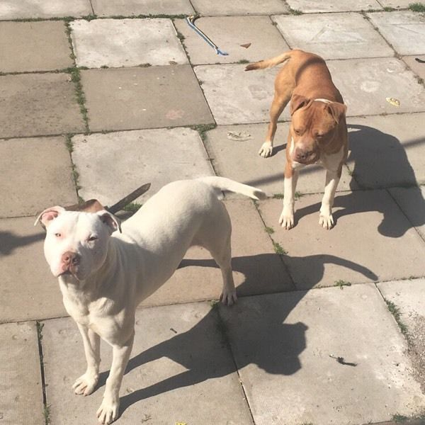 2 male dogs free to good home
