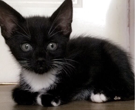 Kittens available males