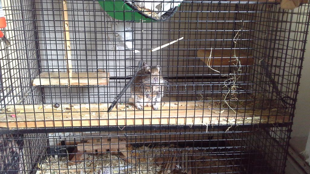 Pet cage: Large Degus cage with fittings