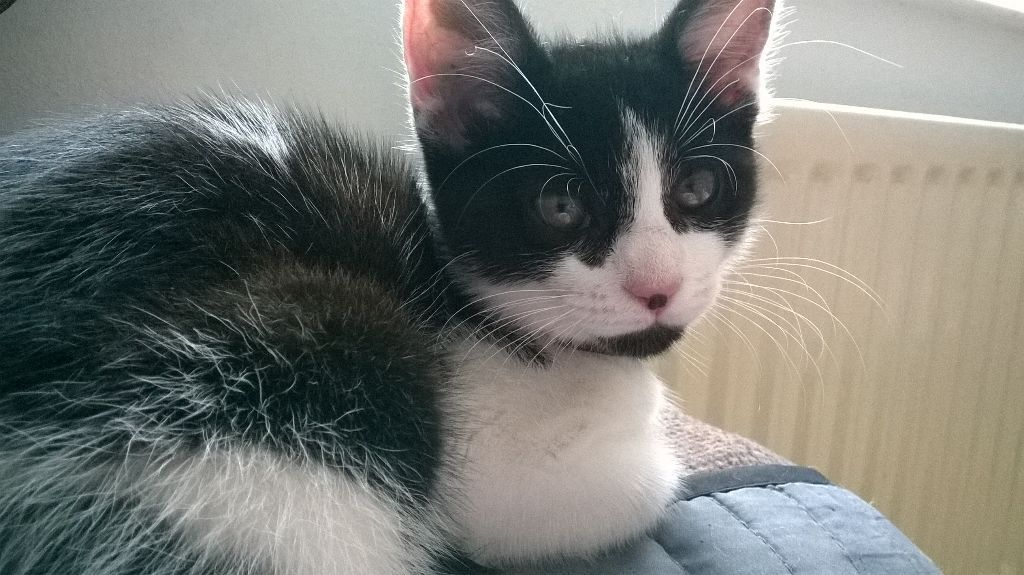 little girl kitten ?? called Orio looking for a special new home.