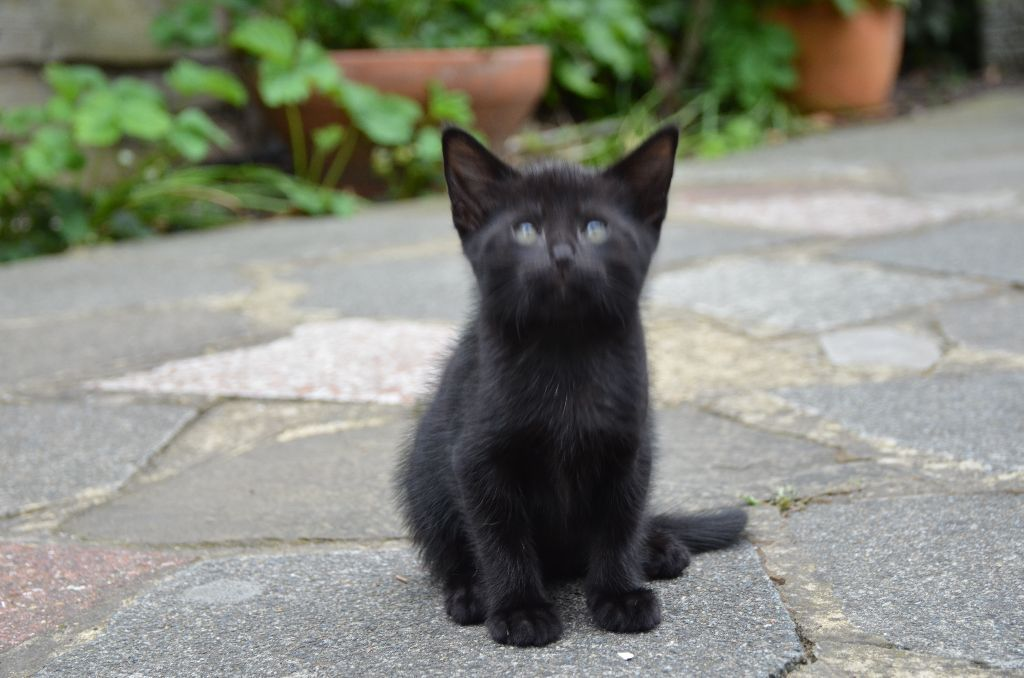 Just 2 kittens left in need for loving home :)