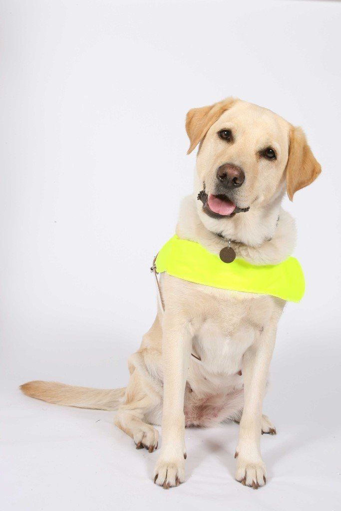 Guide Dogs Fundraising Volunteers Wanted