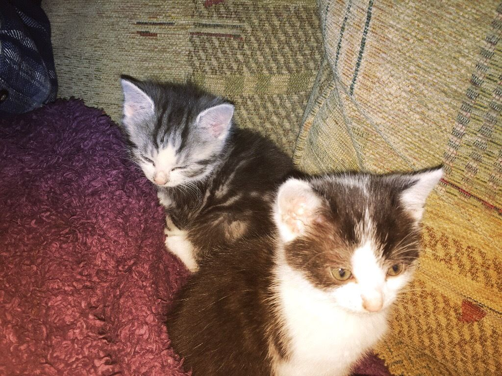 Two kittens looking for good home