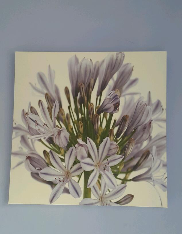 Pretty canvas of lilac flowers