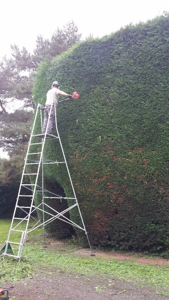Garden hedge cutting and tree service
