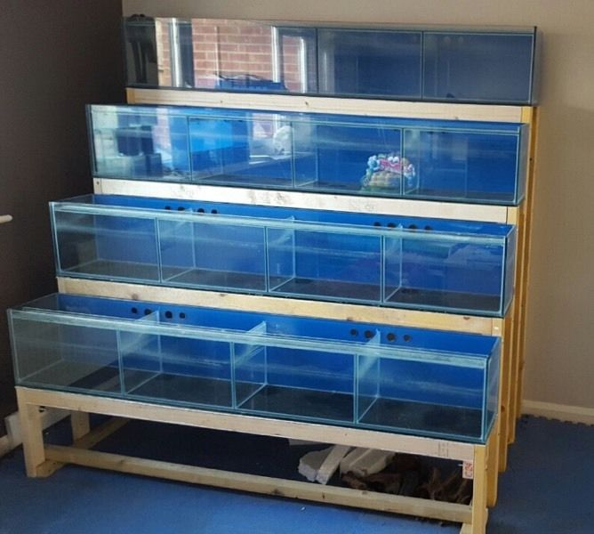 Fish Tank Shop Rack 4 x aquariums with 16 x tanks