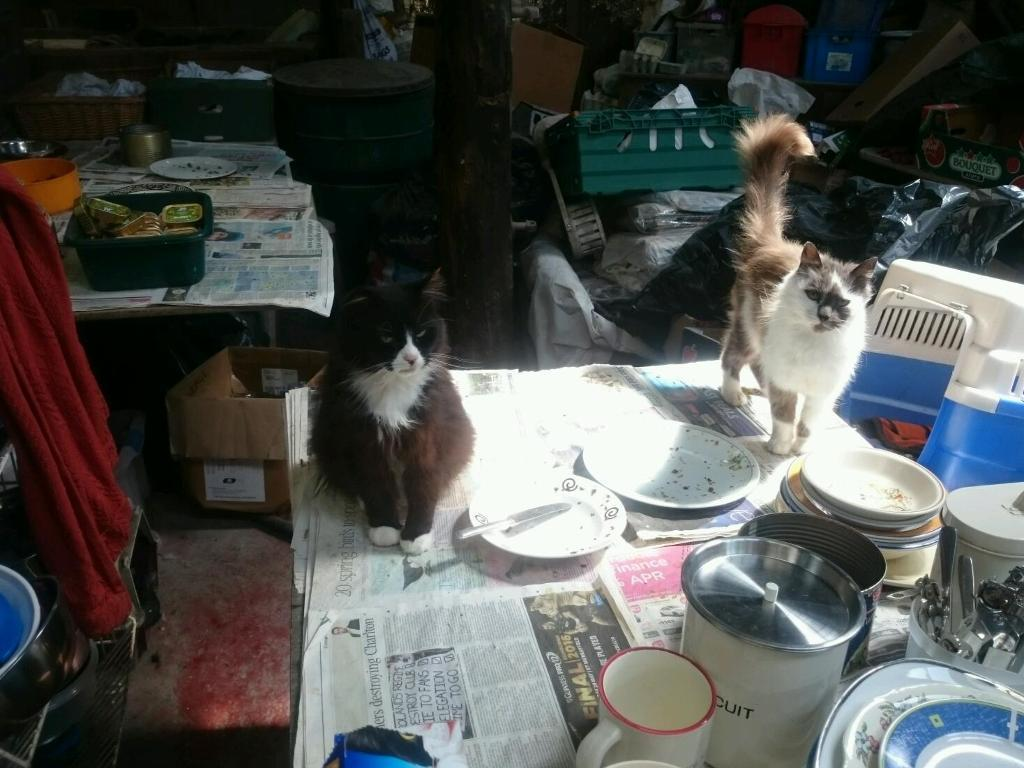 Help wanted please, Whinnybank cat rescue,