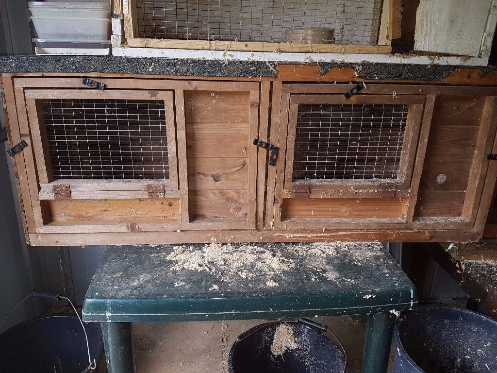 guinea pig/rabbit hutches