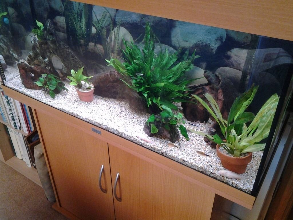 Fishtank, Jewel Rio 180 (180 litres) and accessories including stand, heater, filter, etc.
