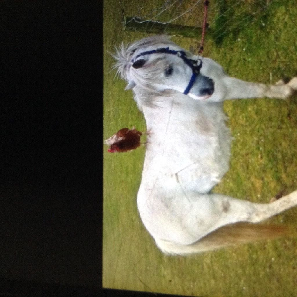 Great wee pony