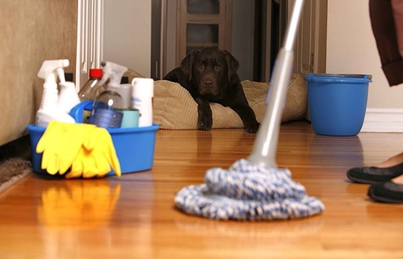 House clean and home help