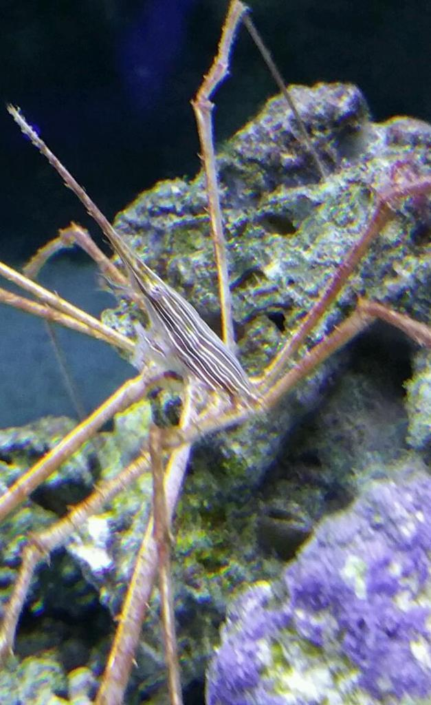 Crab Arrow