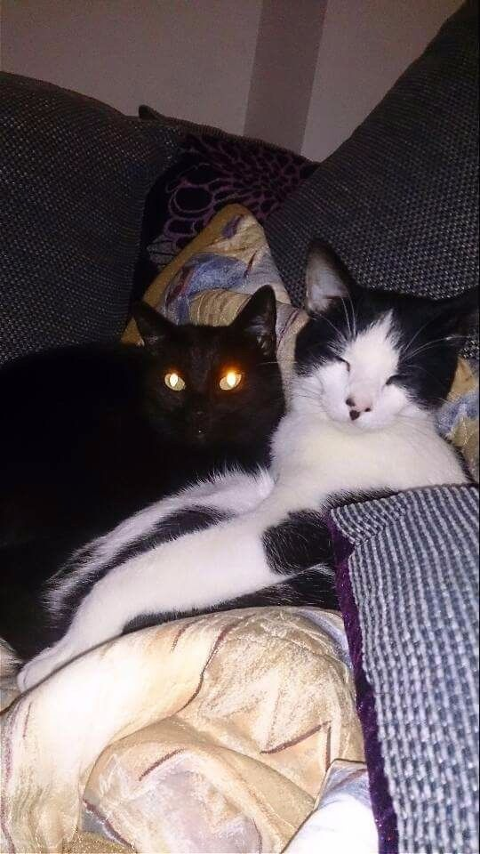 Two cats needing a new home