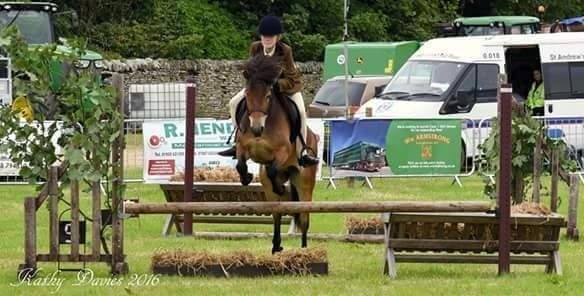 Registered Exmoor Pony 12.2/3hh 6yrs old competition/pony club/riding club pony Scopey Jump