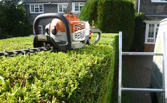 HEDGE/BUSH CUTTING