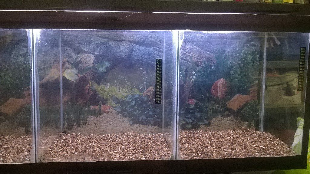 FISH - 4ft breeding tank for sale