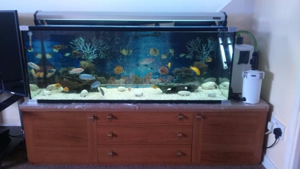 4 ft malawi fishtank full setup