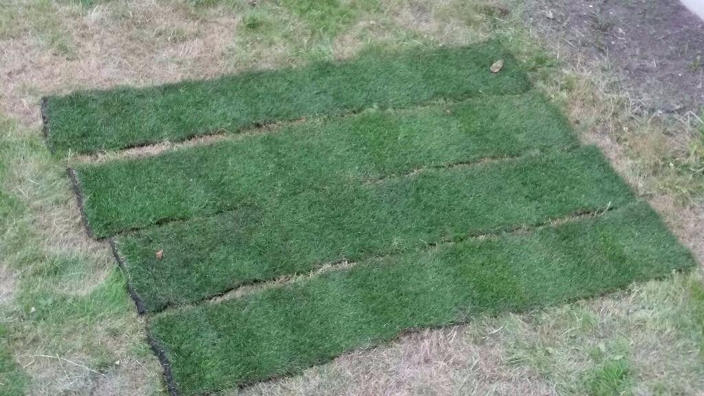Fresh lawn Turf - sports turf. Excellent quality