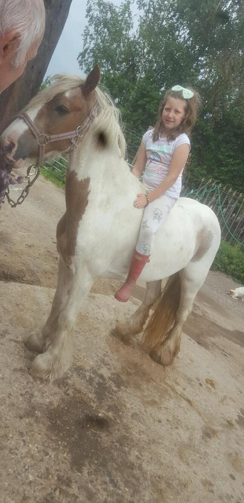 ** REDUCED**13.3hh BEAUTIFUL RED AND WHITE COB PONY FOR SALE