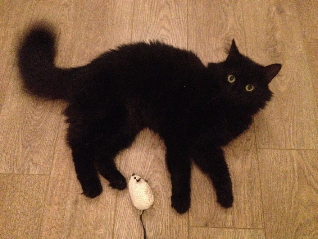Crouch End - Lost Cat