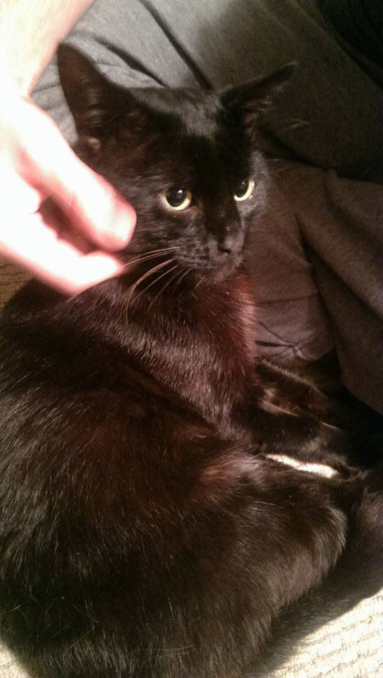MISSING MALE BLACK CAT GLASGOW