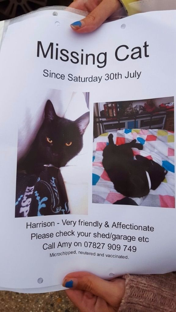 Lost black cat with white collar. Male