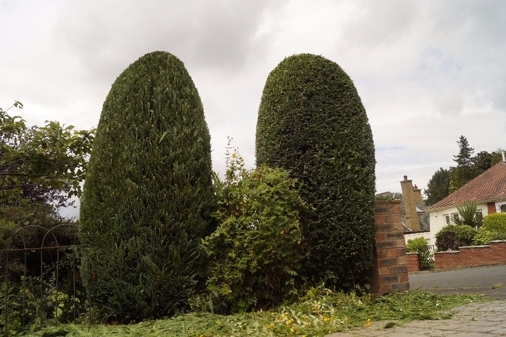 HEDGE CUTTING fencing , , tree services , turf, decking ,paving,