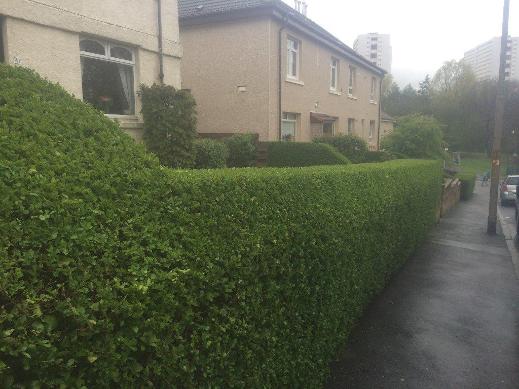 DO IT ALL..garden maintenance,Tidy Ups,Fence Erected,Deco Stones,North/South Lanarkshire covered