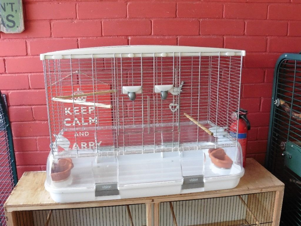 Pair of Celestial Parrotlets and Vision cage for sale