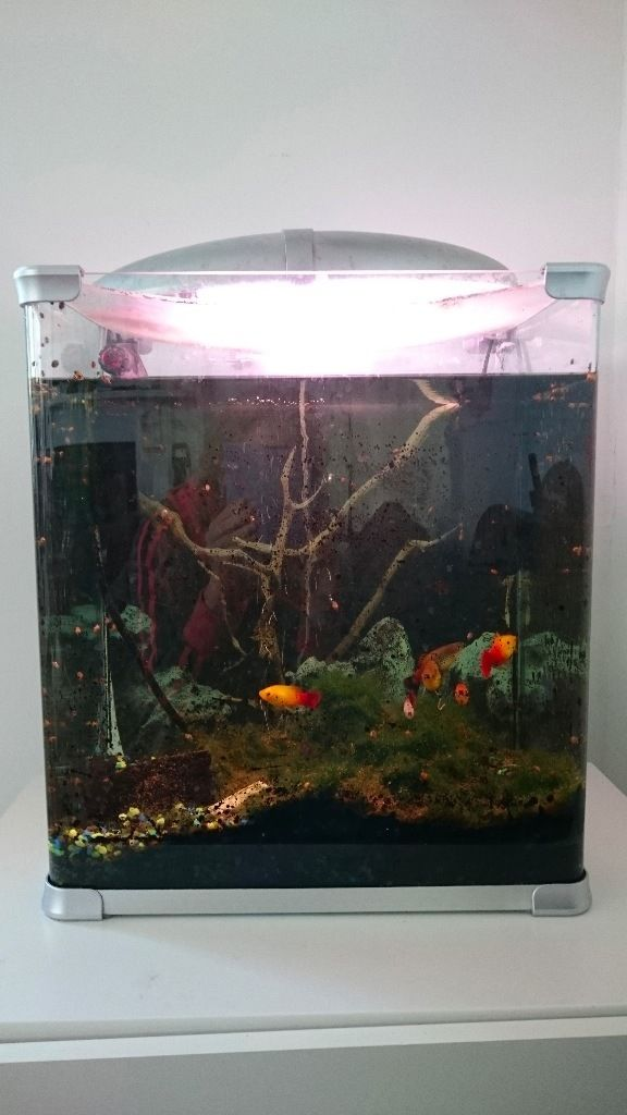 Arcadia Arc Eclipse 45 Litre Fish Tank with all Accessories and Fish