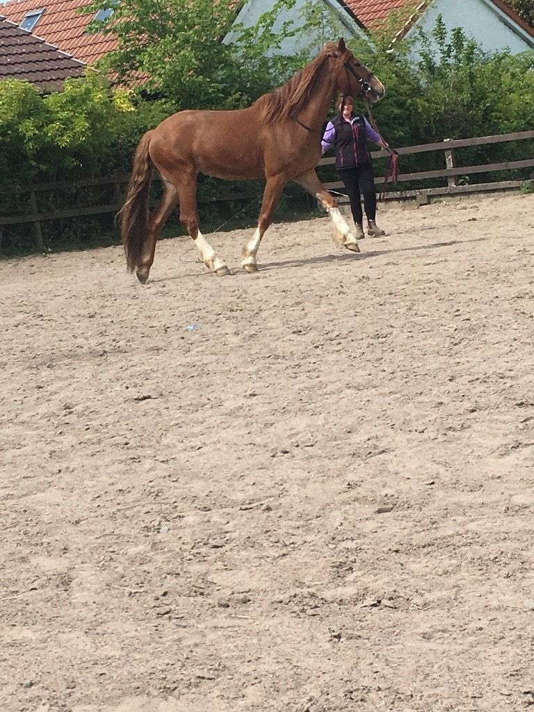 backing and schooling services