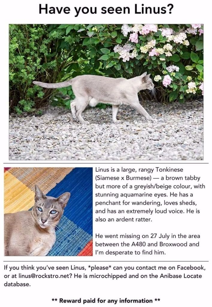 Missing cat tonkinese male neutered