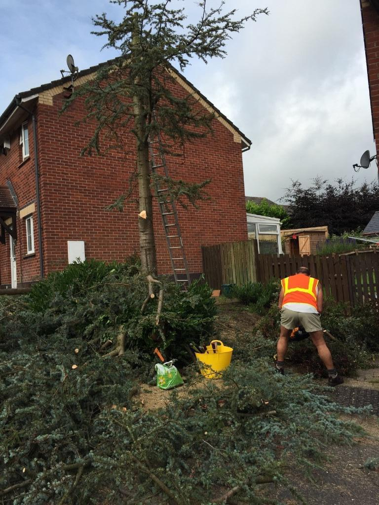 Landscape gardening and Tree surgeon