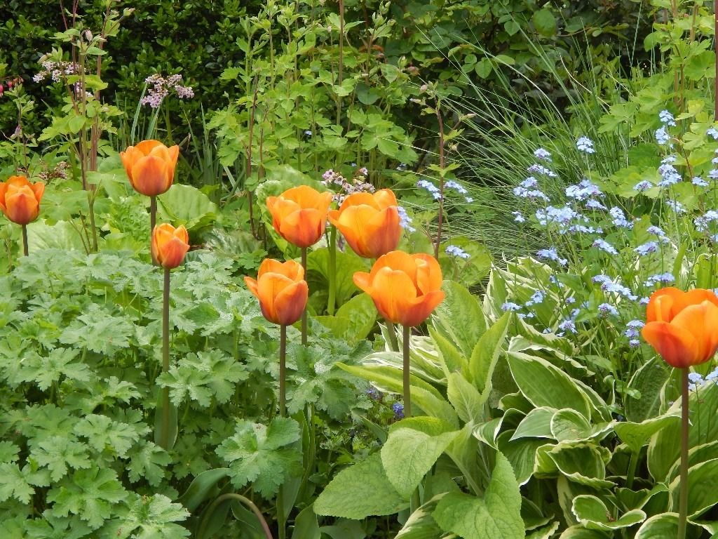 Experienced gardener for maintenance work in the Rudgwick area