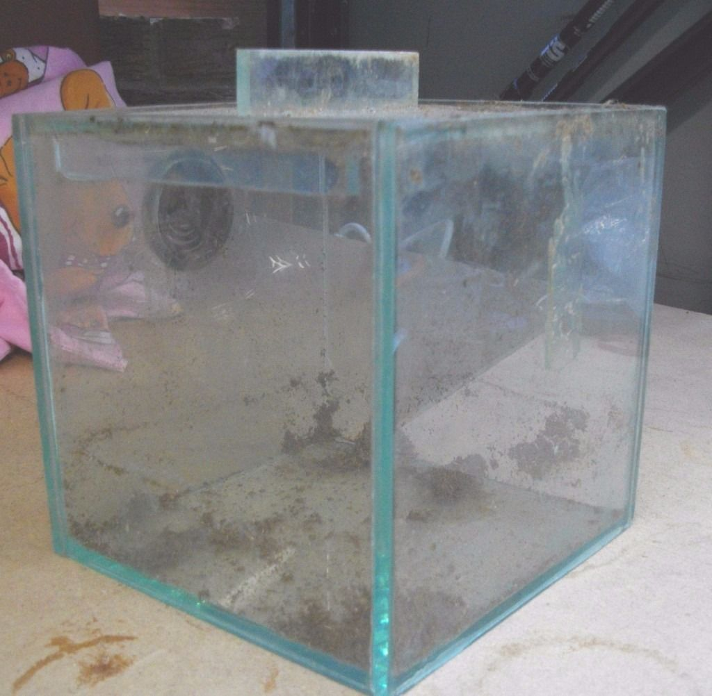 Small ALL GLASS Vivarium All Glass with Vent Spiders Scorpion Frogs
