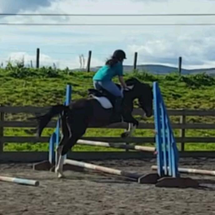 15.3hh for part share
