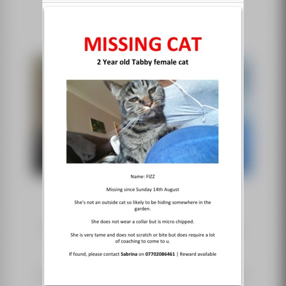 Missing Cat (Much Loved)